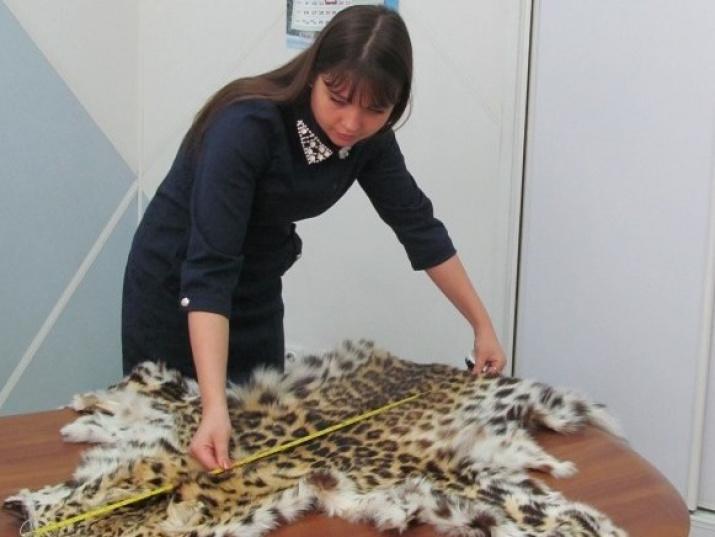 Замдиректора ФГБУ Земля леопарда Елена Салманова изучает изъятую шкуру