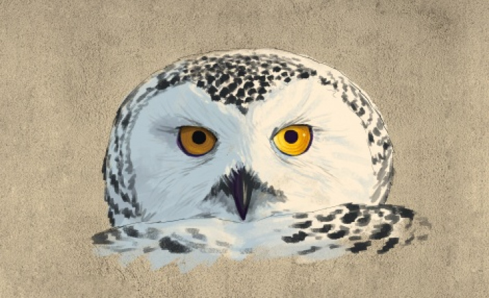 """Polar owl"" graffiti sketch"