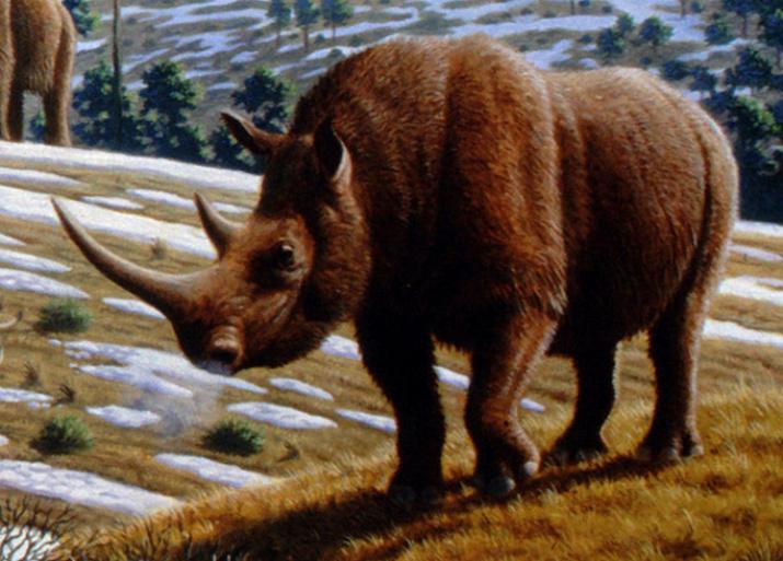 Шерстистый носорог. Источник: wikipedia.org