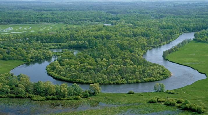 Река Десна ниже Брянска и водоохранные леса вдоль неё. Фото: Игорь Шпиленок