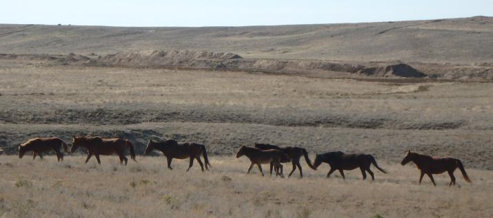 Индерская степь и кони (фото Головачев И.В.)