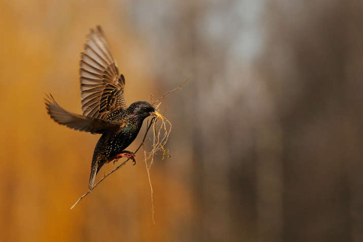 Фото: Виктор Тяхт