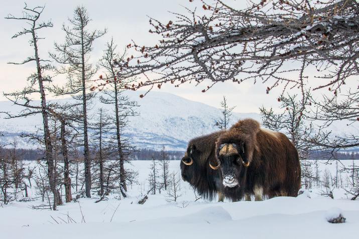 Фото: Константин Шатенев
