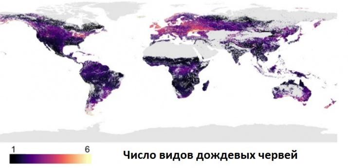 Изображение предоставлено пресс-службой Географического факультета МГУ имени М.В. Ломоносова