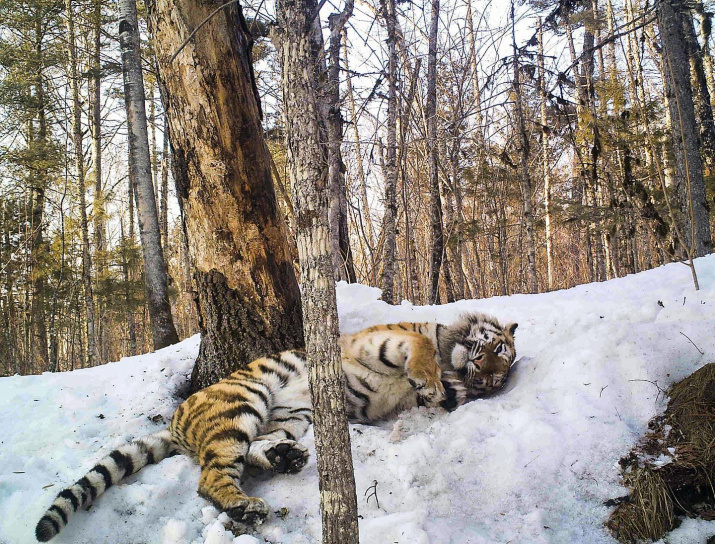 Фото: Сихотэ-Алинский государственный природный биосферный заповедник имени К. Г. Абрамова