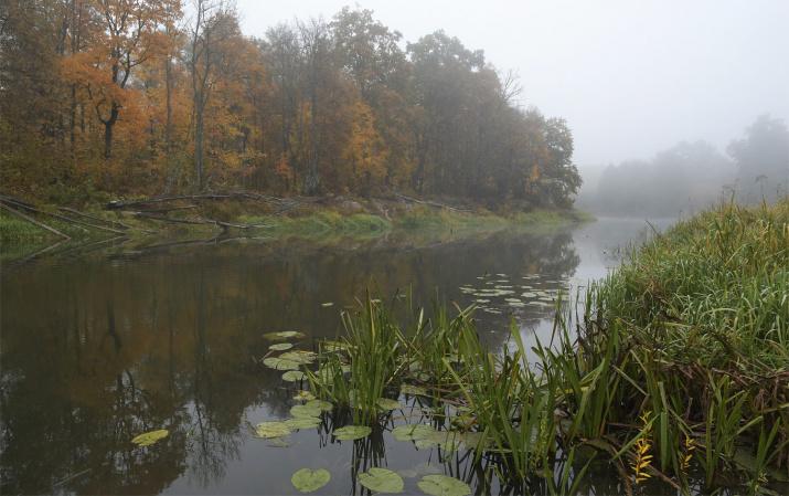 Осень в Брянском лесу. Фото: Игорь Шпиленок