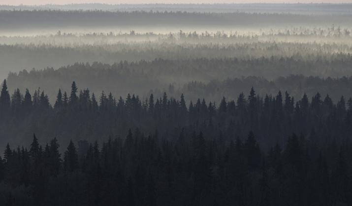 Проект Первозданные леса России. Фото: Игорь Шпиленок