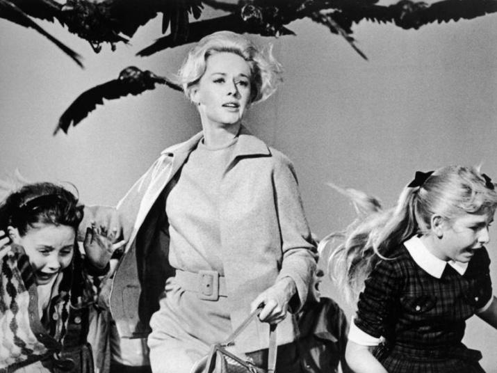 "Кадр из фильма ""Птицы"" (1963)"