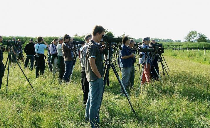 Шотландские «бёрдвотчеры» наблюдают за пигалицей белохвостой. Фото wikipedia.org