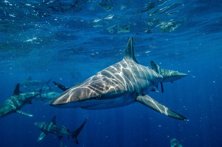 Акула. Источник: pixabay