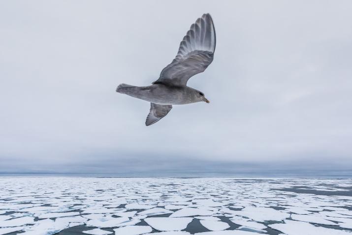 Баренцево море. Фото: Кирилл Уютнов