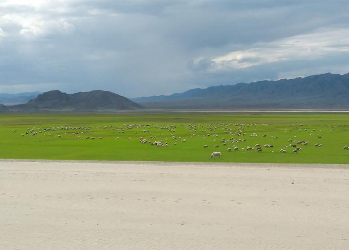 Пасторальный вид с раскопа в Туве, с берегов Саяно-Шушенского водохранилища. Вместо изумрудных полей скоро будет море. Фото: Павел Леус