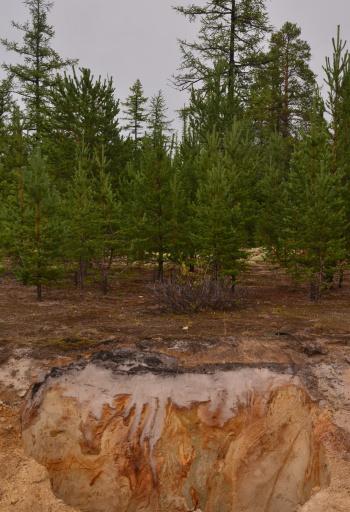 """Мерзлотные процессы создают необычные """"картины"""" в почвах (Фото: Soil ART)"""