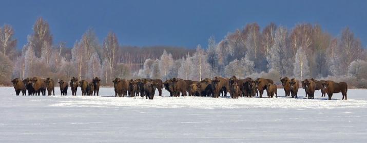 """Фото с сайта национального парка """"Орловское полесье"""""""