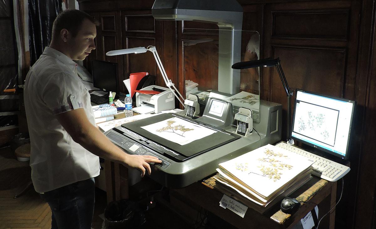 Листья и мхи под сканером: почему Цифровой гербарий МГУ так важен для  мировой науки | Русское географическое общество