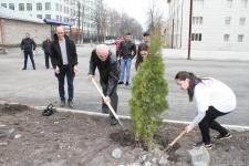 Акция ''Дерево Победы''