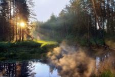 Приток реки Оки. Фото: Андрей Ершов