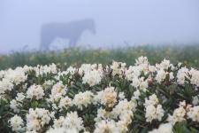 Поля рододендронов. Фото: Антон Агарков
