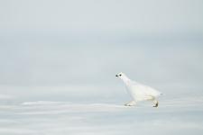 Международный день птиц. Фото: Сергей Горшков