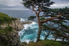Сосны на морском берегу. Фото: Виталий Берков