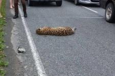 Фото предоставлено ФГБУ ''Земля леопарда''