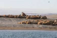 Морские животные, замеченные экспедицией на берегу