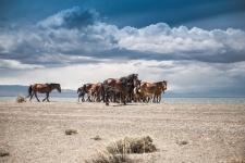 Лошади на берегу озера Дерген