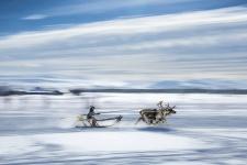 Быстрее ветра. Фото: Виталий Новиков