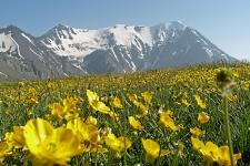 Горно-луговой ландшафт. Фото предоставлено Дагестанским республиканским отделением РГО
