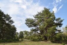 Дьяковский лес – результат уникальный мелиорации песчаных земель