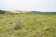 Судьба бывших заповедных степей Центрального Черноземья. Фото Александра Александровича Чибилева.