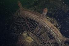 Фотография из экспедиции Центра подводных исследований РГО