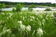 Озеро Лебяжье национального парка «Бузулукский бор».  Фото: Александра Чибилёва