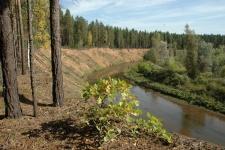 Национальный парк «Бузулукский бор» – река Боровка. Среднеборовский яр. Фото: Александр Чибилёв