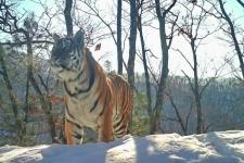 """Фото: национальный парк """"Земля Леопарда"""""""