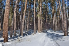 Национальный парк «Бузулукский бор» Оренбургской области.  Фото: Павел Вельмовский