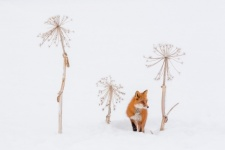Hidden. Photo by: Denis Budkov, the winner in the III Most Beautiful Country Photo Contest