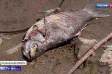 Гнилая рыба заполонила Волгу - Россия 24