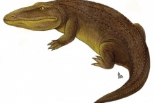 Wetlugasaurus. Photo is taken from open sources