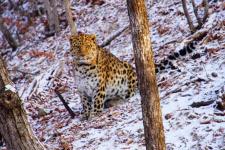 Фото: Абхилаш Сикар