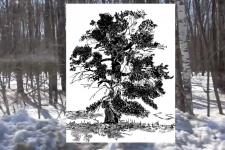 Мифы Чарокайского леса 2019