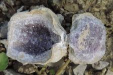 Наросты кристаллов аметиста в раковине продуктус
