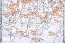 Встреча осени и зимы. Фото: Елена Пахалюк