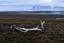 Северная Земля. Фото: Алексей Логинов