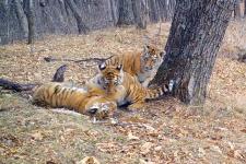Фото с сайта leopard-land.ru