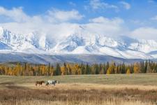 Республика Алтай. Фото: Ольга Бурда