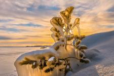 Фото: Фёдор Лашков