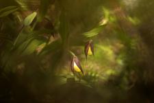 Венерины сны. Фото: Светлана Иваненко