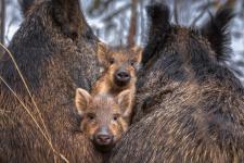Маленькие защитники. Фото: Фёдор Лашков