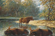 Изображение с сайта breedingback.blogspot.com